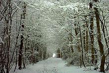 Hamstreet_Woods_in_Snow_-_geograph.org.uk_-_73056